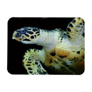 Imán del premio de la tortuga de mar del Leatherba