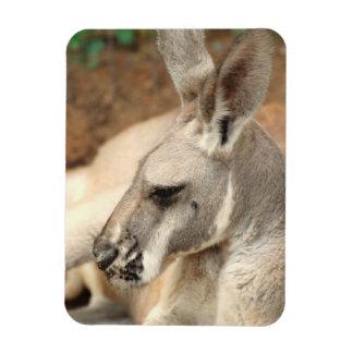 Imán del premio del perfil del canguro