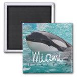 Imán del refrigerador de la foto de la ballena de