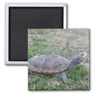 imán del refrigerador de la tortuga de la tortuga