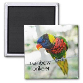 Imán del refrigerador de Lorikeet del arco iris