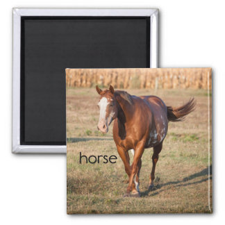 Imán del refrigerador del caballo