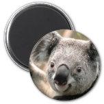 Imán del refrigerador del oso de koala