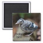 Imán del refrigerador del pájaro de bebé