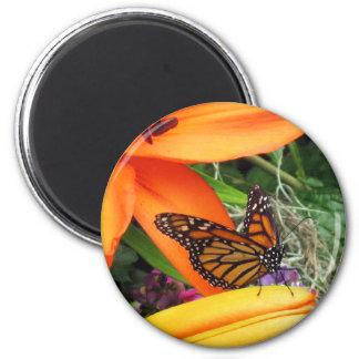 Imán del refrigerador del trono de la mariposa de