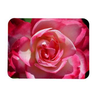 Imán del rosa rosado y blanco