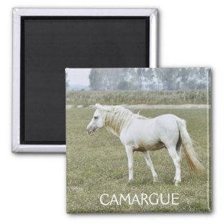 Imán del semental de Camargue
