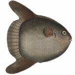 Imán del Sunfish de océano del Mola del Mola para  Escultura Fotografica