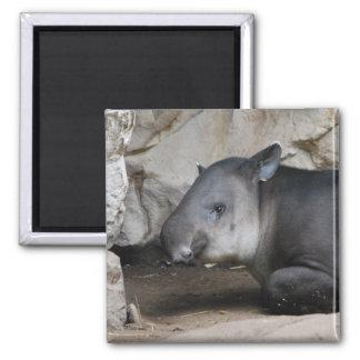 Imán del Tapir