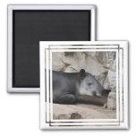 Imán del Tapir de Baird