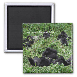 Imán del texto del grupo del gorila de montaña
