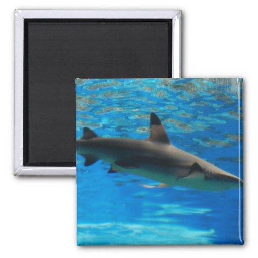 Imán del tiburón de la natación