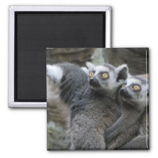 Imán del transporte por ferrocarril del Lemur