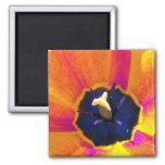 Imán del tulipán 3 de la opinión de un insecto