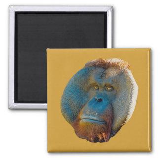 Imán del varón del orangután