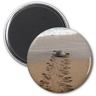 Imán del viaje de la tortuga de Hawksbill