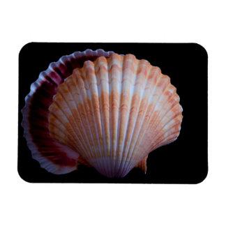 Imán del vinilo de Shell de concha de peregrino