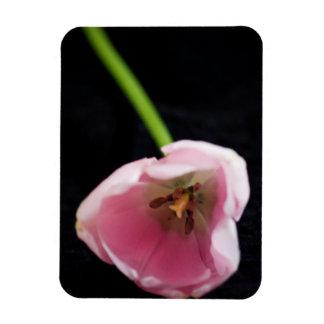 Imán del vinilo del tulipán 3272