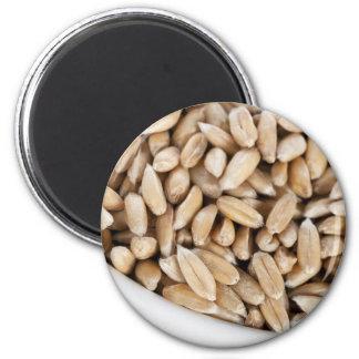 Imán deletreado sano del grano