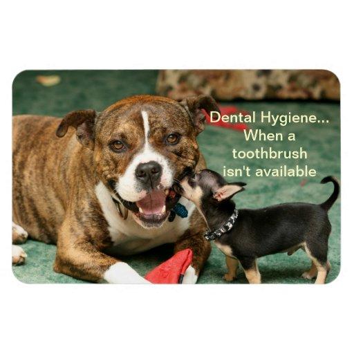 imán dental de la higiene