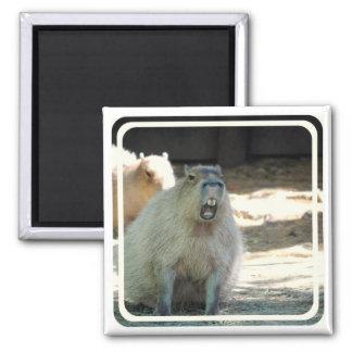 Imán divertido del Capybara