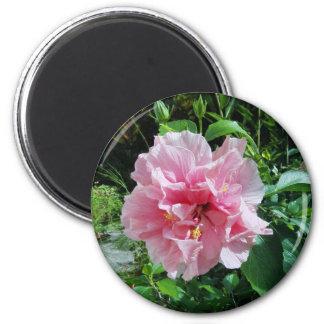 Imán doble rosado del hibisco
