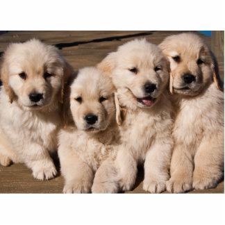 Imán dulce de cuatro perritos del golden retriever esculturas fotograficas