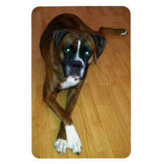Imán educado de la foto del perro del boxeador
