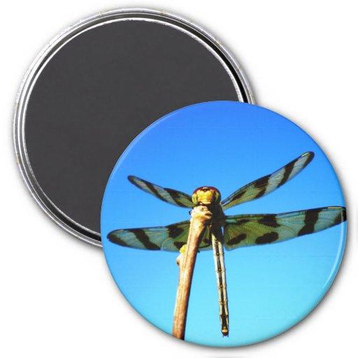 Imán encaramado libélula