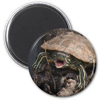 Imán enojado de la tortuga