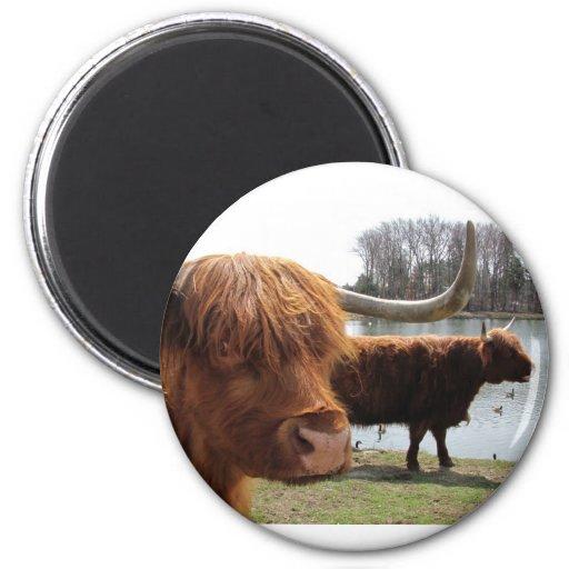 Imán escocés del ~ del ganado de la montaña