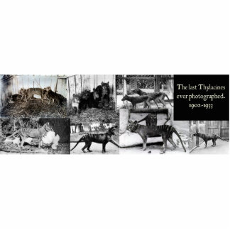 Imán/escultura del recorte de las fotos del Thylac Escultura Fotografica