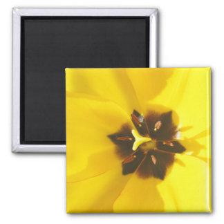 Imán expuesto tulipán amarillo