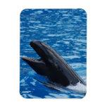 Imán falso del premio de la orca