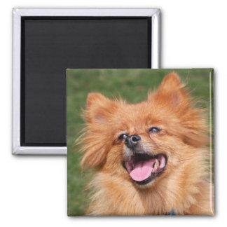 Imán feliz del perro de Pomeranian, idea del regal