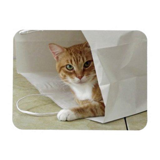Imán flexible anaranjado del gato de Tabby