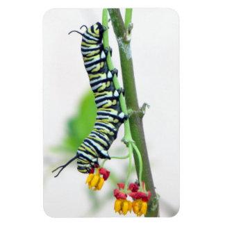 Imán flexible de Caterpillar del monarca