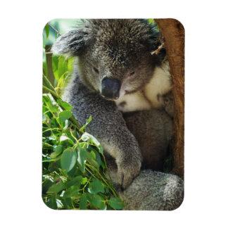 Imán flexible de la koala casual