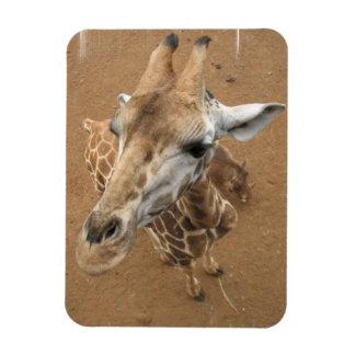 Imán flexible de la mirada de la jirafa