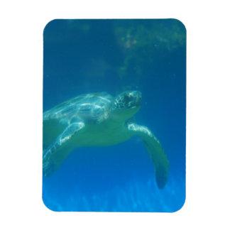 Imán flexible de la nadada de la tortuga de mar