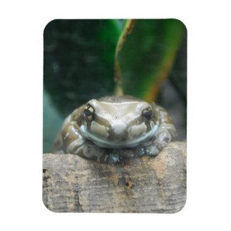 Imán flexible de la rana de la leche del Amazonas