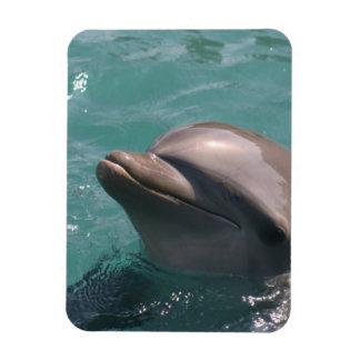 Imán flexible del delfín lindo