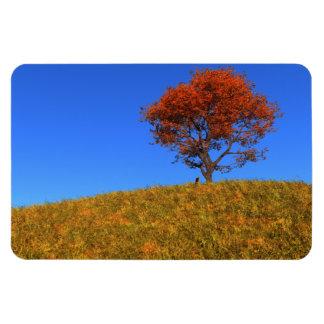 Imán flexible del día claro del otoño