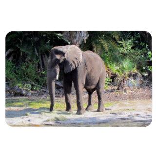 Imán flexible del elefante