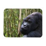 Imán flexible del gorila de la tierra baja