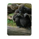 Imán flexible del gorila pensativo