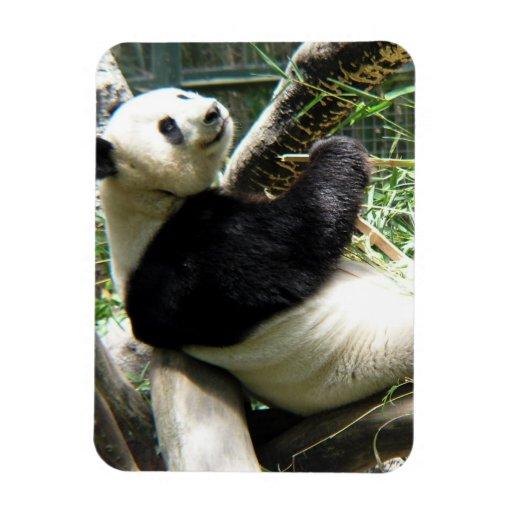 Imán flexible del panda y de bambú