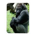 Imán flexible del resplandor del gorila