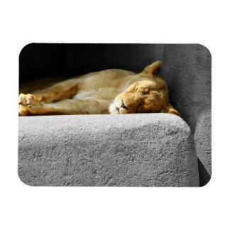 Imán flexible el dormir de la leona