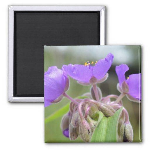 Imán floral púrpura macro del refrigerador